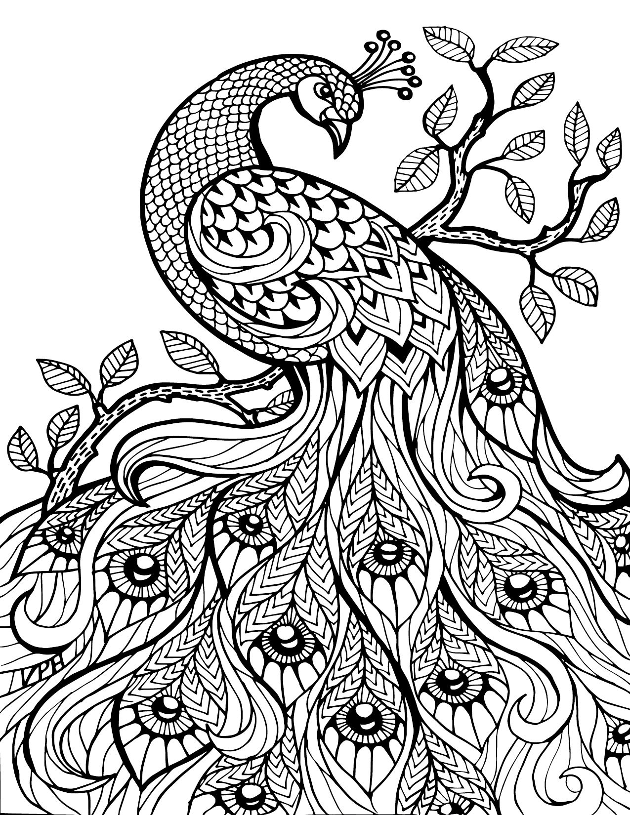 Free Printable Coloring Pages For Adults Only Image 36 Art - Free Printable Peacock Pictures