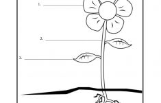 Free Printable First Grade Worksheets