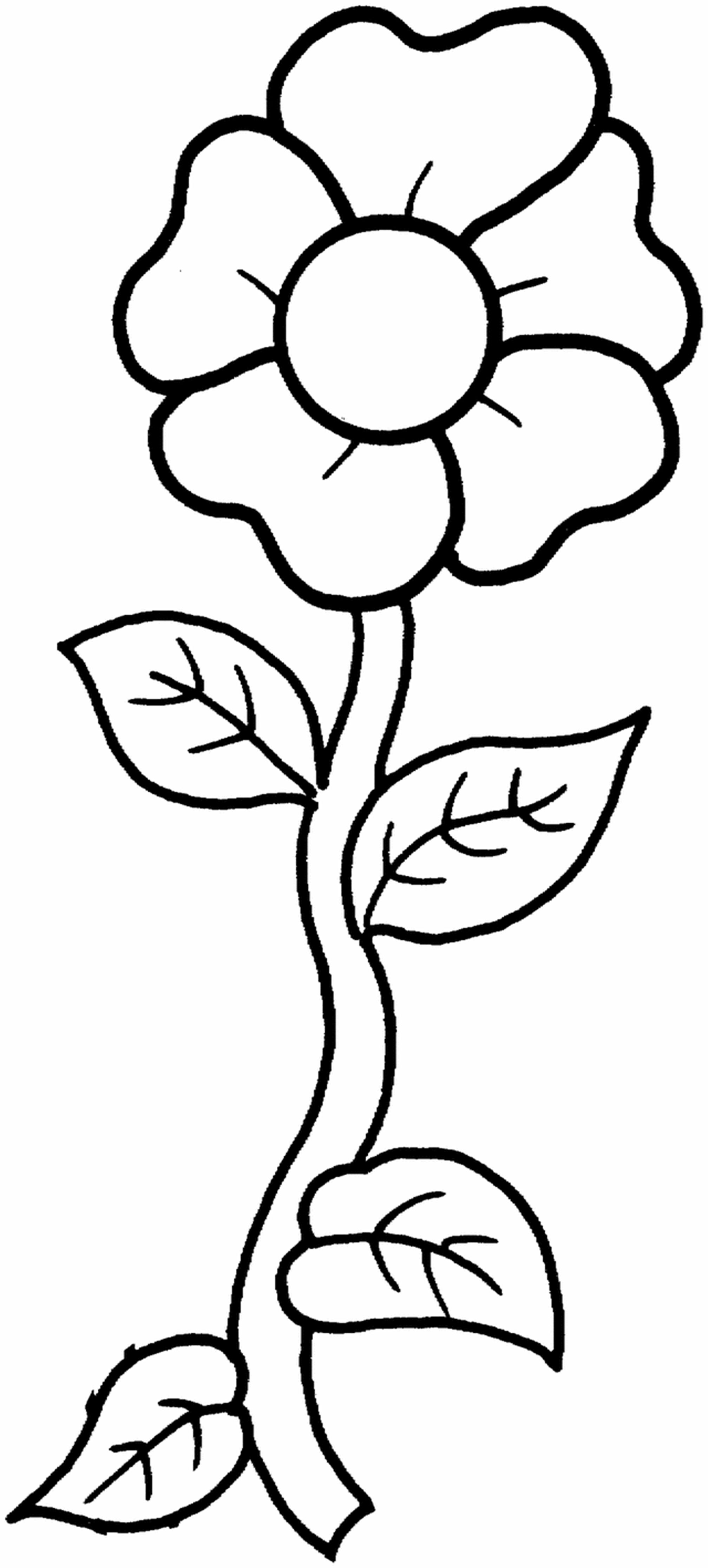 Free Printable Flower Coloring Pages For Kids Best | Coloring_Pages - Free Printable Flower Coloring Pages
