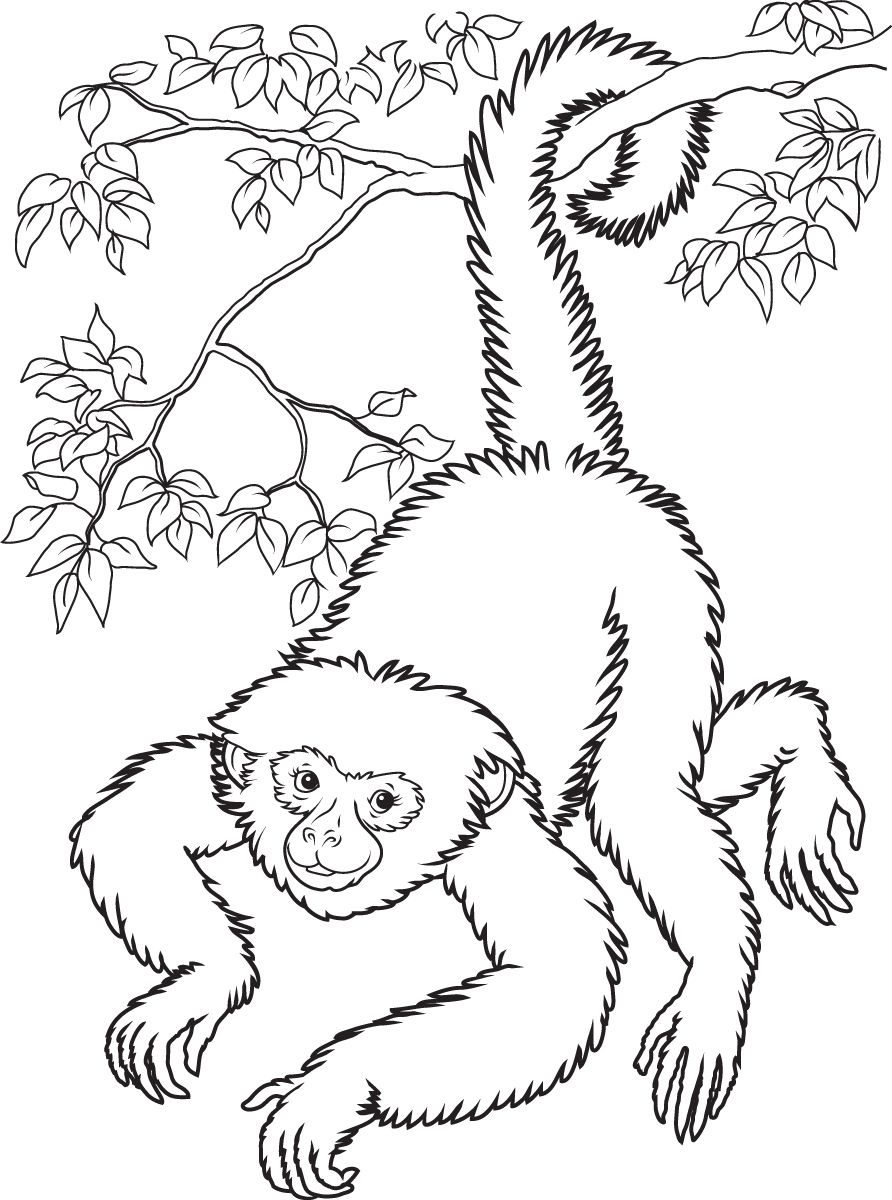 Free Printable Monkey Coloring Pages For Kids | Home Furniture - Free Printable Monkey Coloring Pages