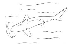 Free Printable Great White Shark Coloring Pages