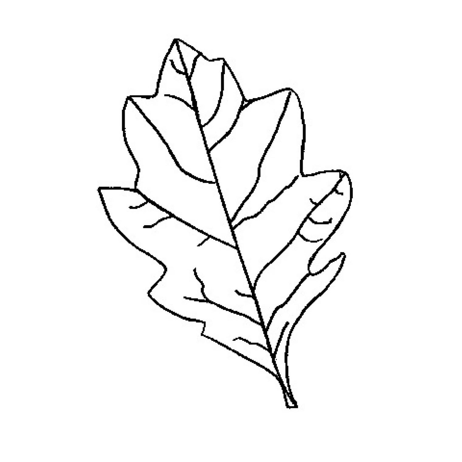 Oak Leaf Outline Group With 80+ Items - Free Printable Oak Leaf Patterns